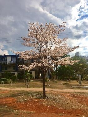 Asa Norte, Brasília (DF) – Daniella Pinho