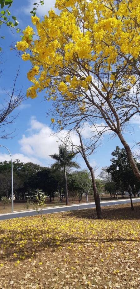 Asa Norte, Brasília (DF) – Socorro Laurentino