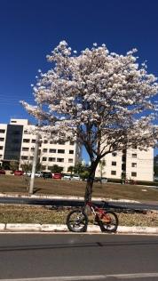 Brasília (DF) – Ely Costa